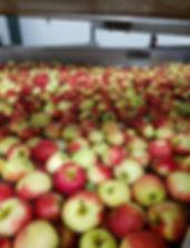 Burg's waterdumper appels en peren
