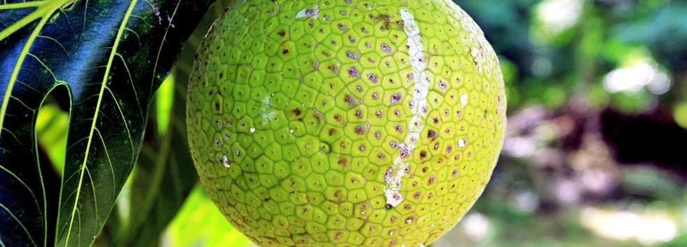 fruit-a-pain-2.jpg