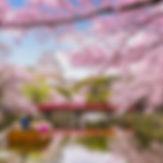 Himeji, Japan at Himeji Castle in spring