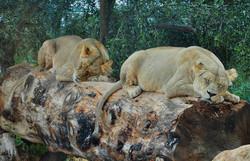 leons+1.jpg