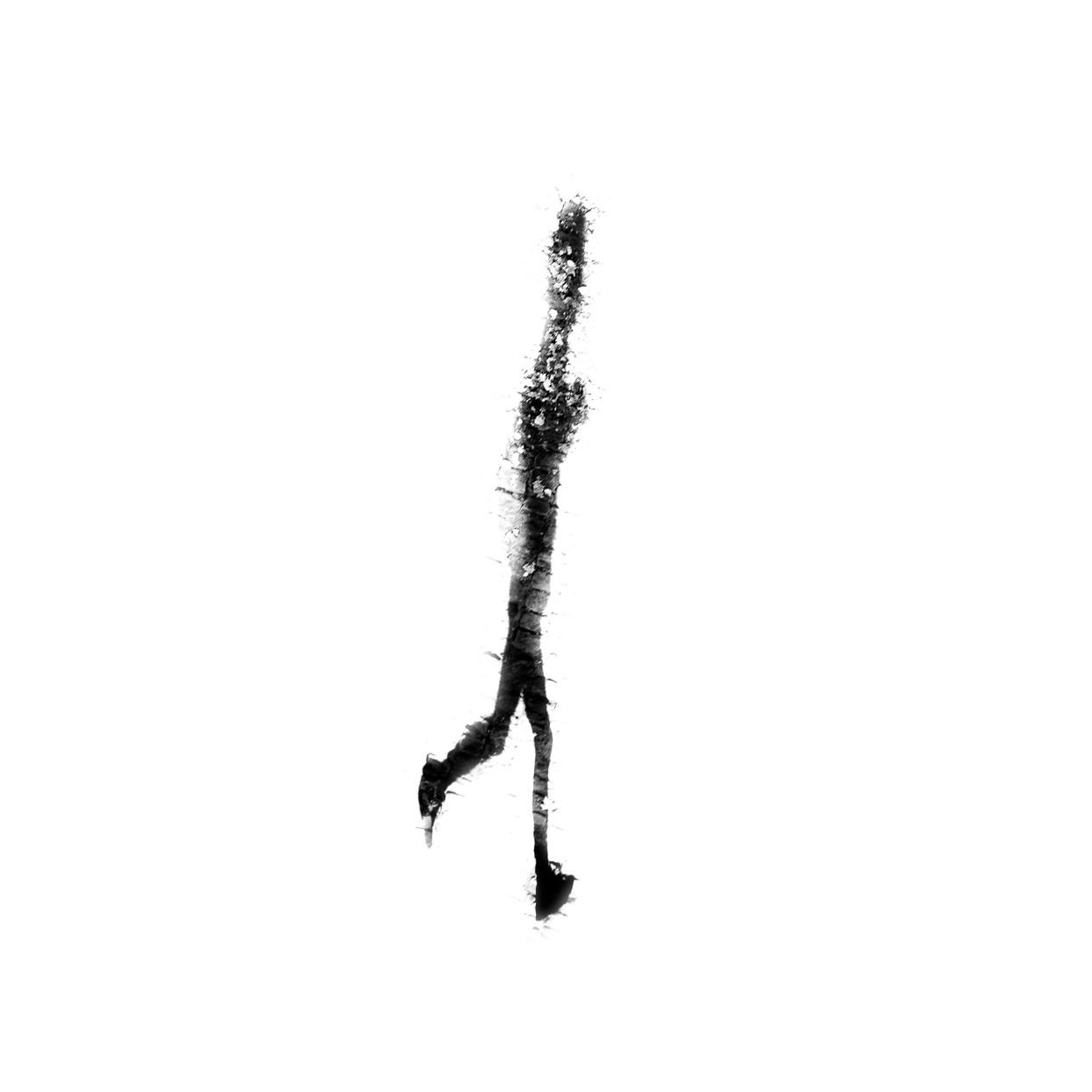 Shadows 8.jpg