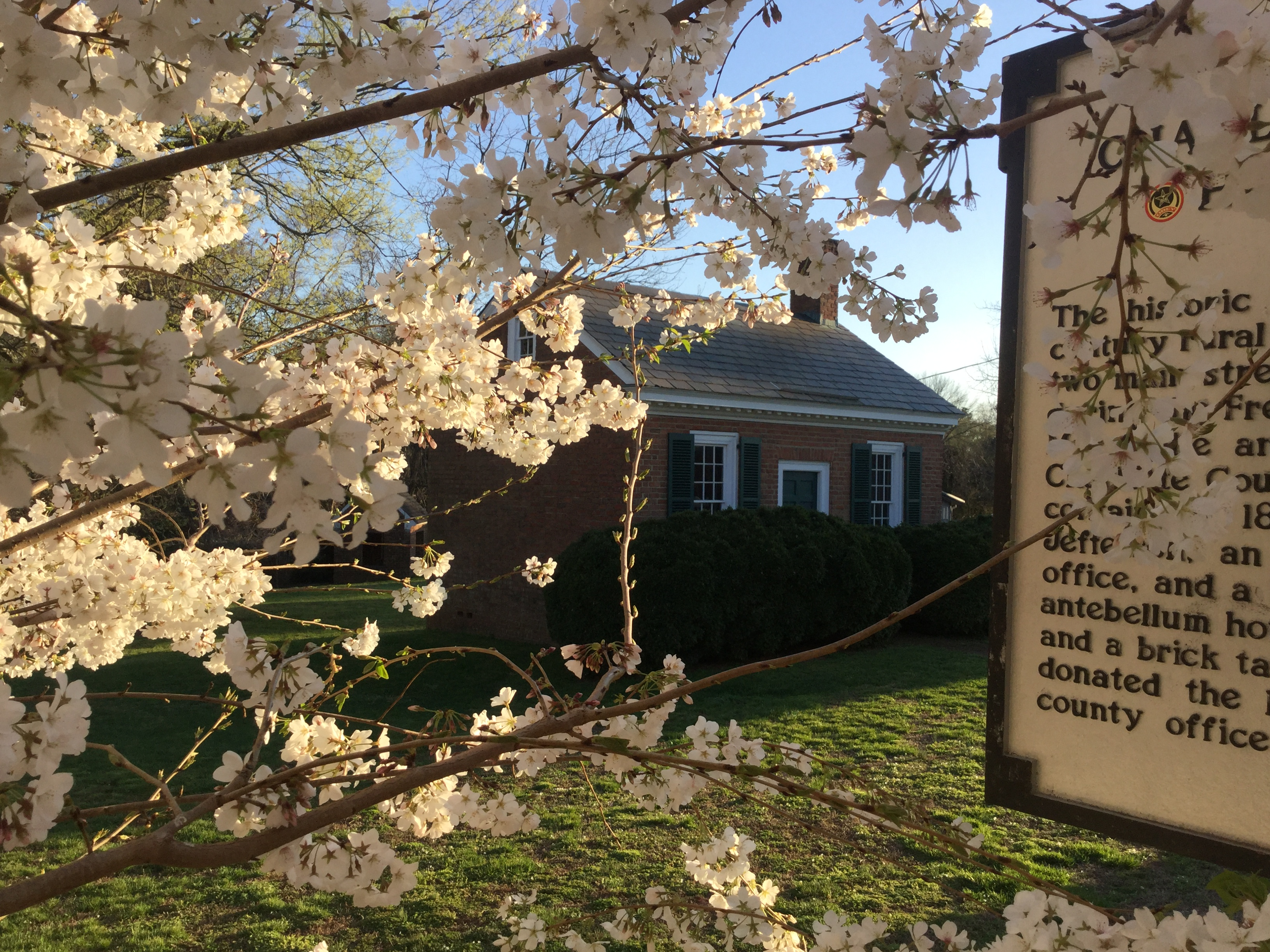 charlotte court house spring 2016 cherry blossoms (5)