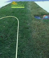 Atlanta Lawn Care, Fertilization, Weed Control