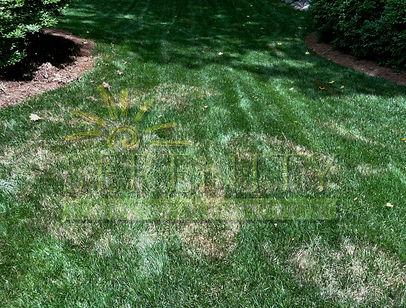 Brown Patch Atlanta Lawn