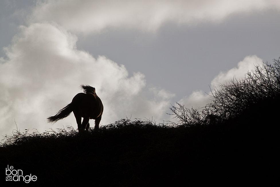 photo voyage cheval