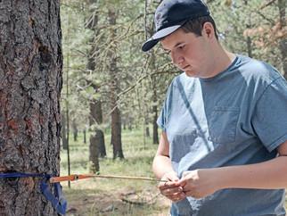 Trees and Teaching