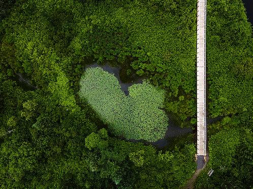 Le coeur des Marais