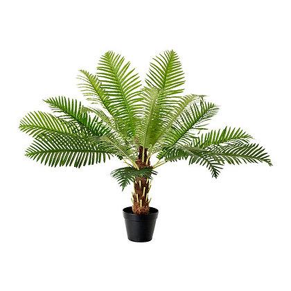 аренда растений пальма