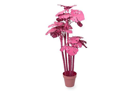 Дерево розовое монстера