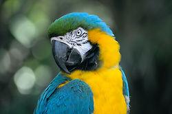 Retrato de ave