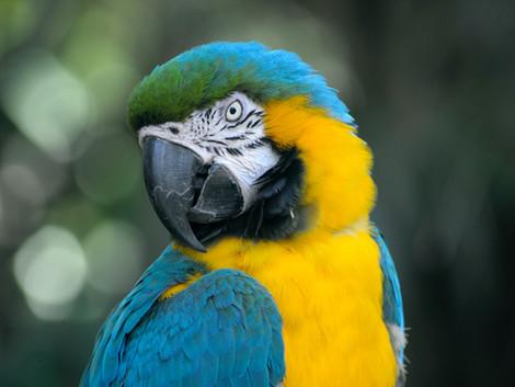 Tierkommunikation mit sprechenden Vögeln
