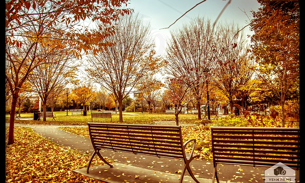 Fall Season at Elmhurst Park Queens Post card