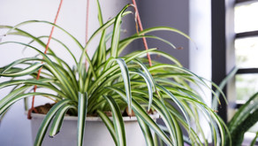 8 Houseplants That Will Survive in Low Light