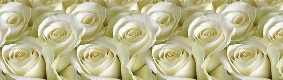 Фартук пластиковый белые розы.jpg
