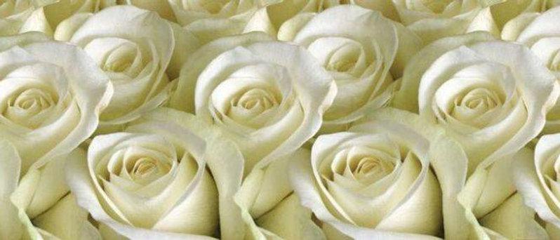 Кухонный фартук пластиковый Белые розы