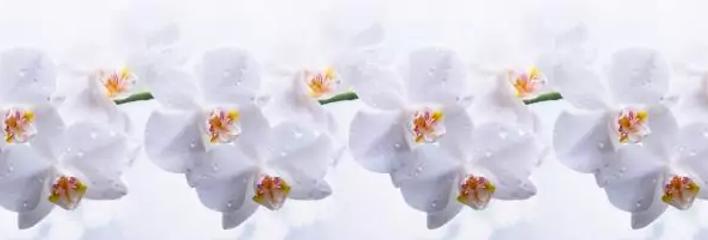 Фартук пластиковый Голубая орхидея 3000*600