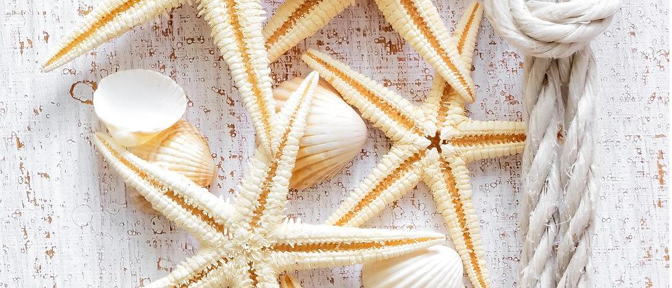Панель пластиковая Ракушка Морской бриз