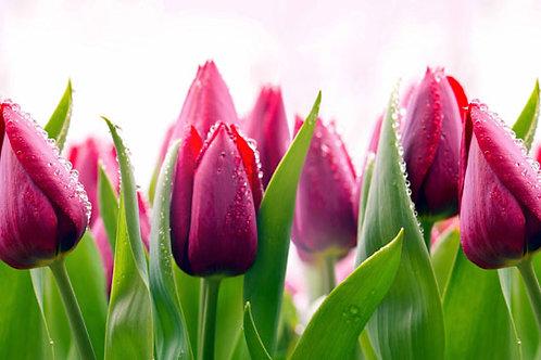Фартук для кухни Тюльпаны