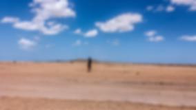 observing the desert