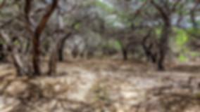 dry forest Guajira desert