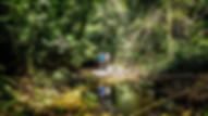 Rio Claro natural reserve