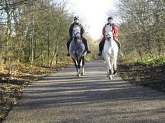 Horses on flexipave
