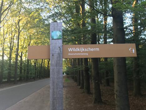 Op zoek naar wild op de Veluwe