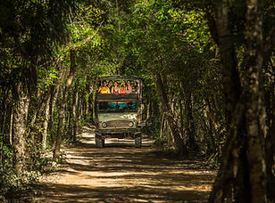 playa-del-carmen-jungle-maya-663-1096.jp
