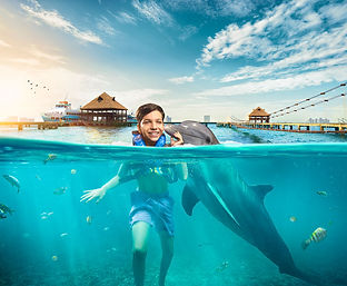 dolphin-discovery-los-cabos-bcs-2.jpg