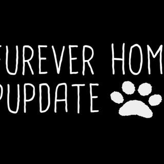 Furever Home Pupdate (2019)