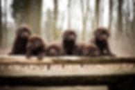 Gruppenfoto Welpen.jpg