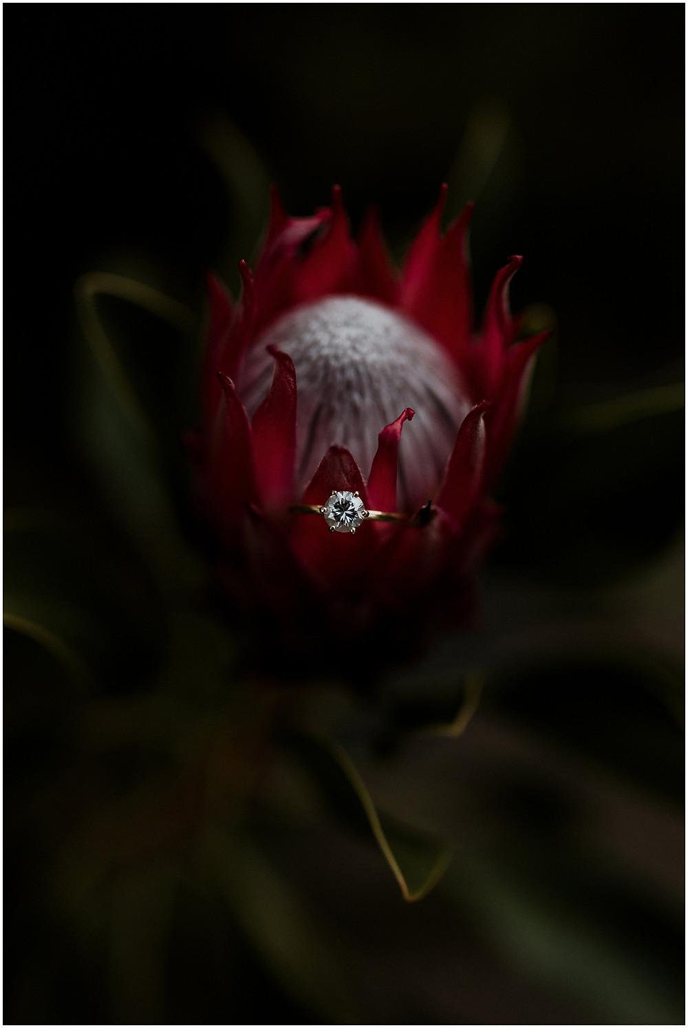 stellenbosch engagement shoot by photographer lauren pretorius