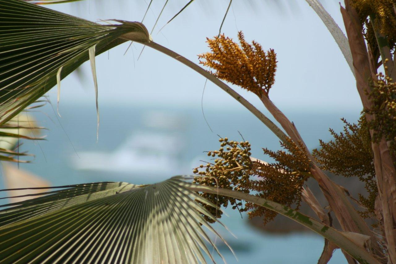 vista de palmeras en Las Pocitas