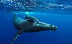 época de ballenas