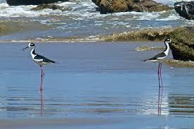 aves exóticas en Las Pocitas