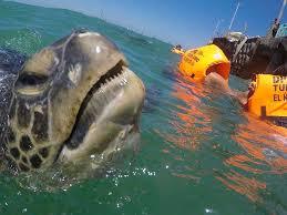 nado con tortugas gigantes