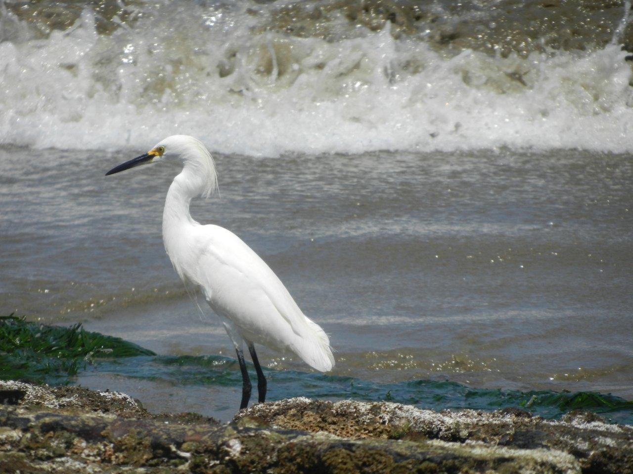 aves migratorias en Las Pocitas