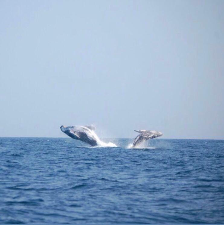 salto de ballena en Las Pocitas
