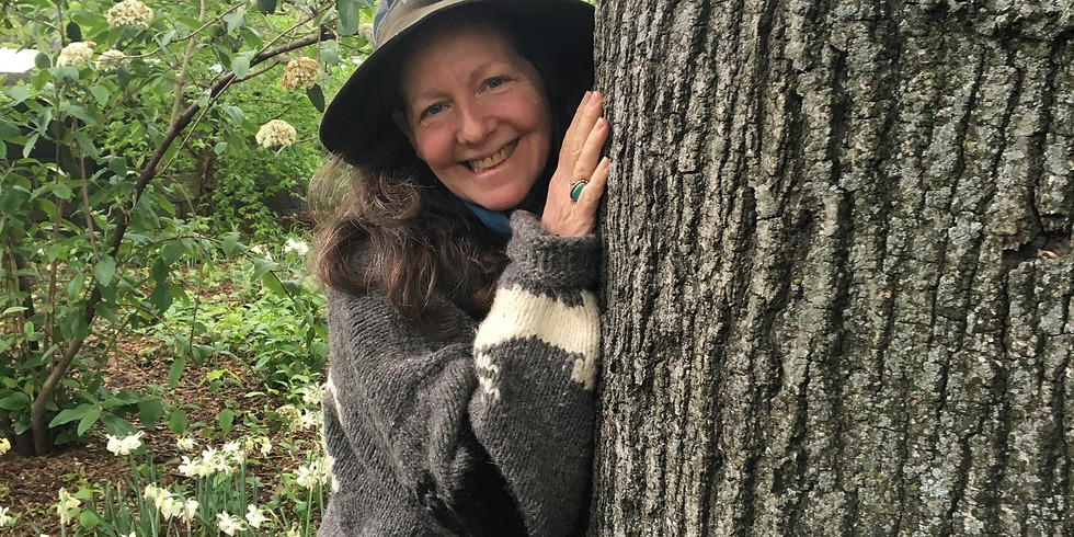 Accessible Herbal Medicine with Robin Rose Bennett