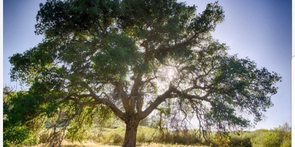 'Take A Breath' - A Guided Meditation