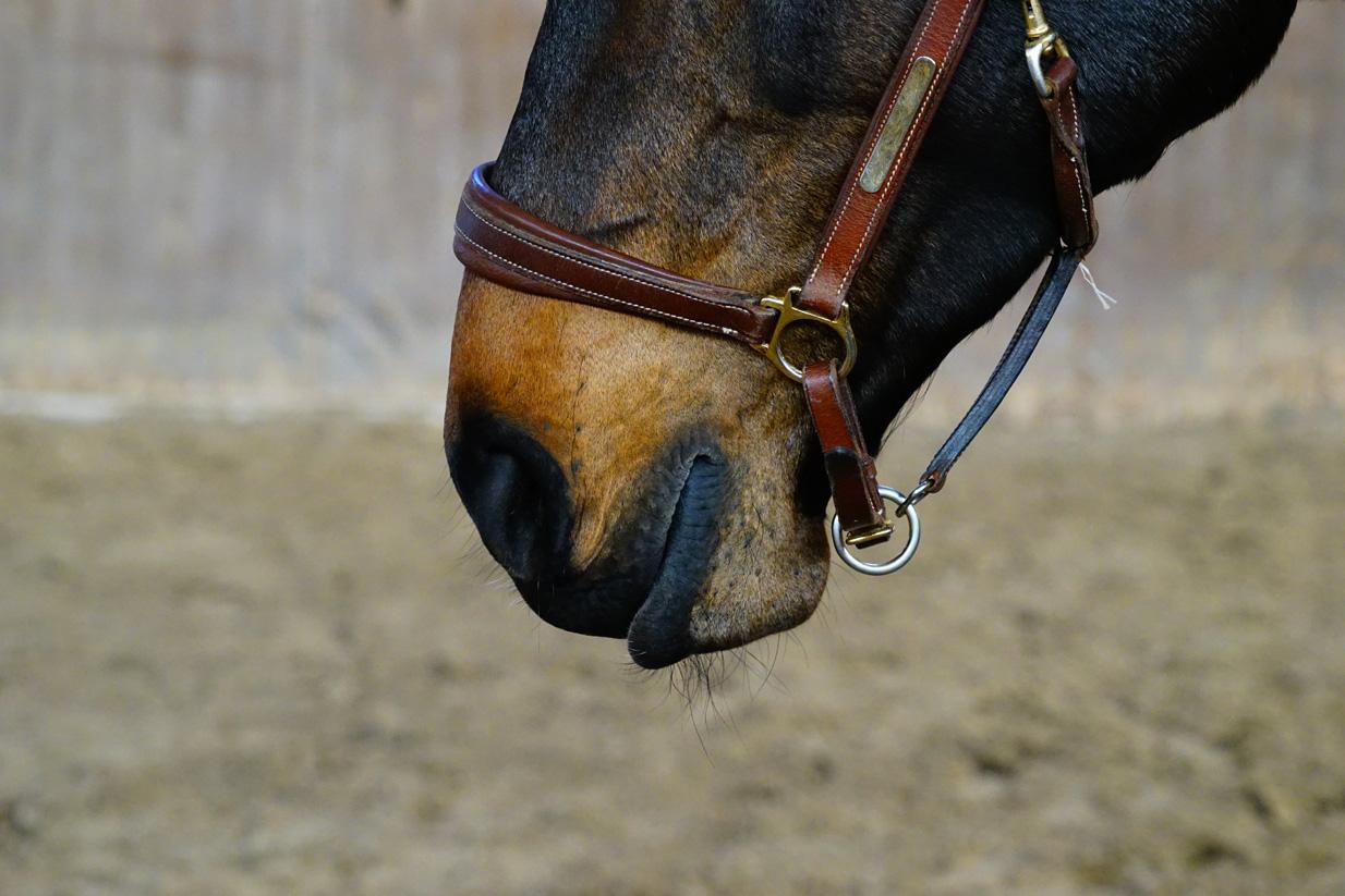 916_Johanna Suhr_Osteopathie Pferde