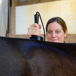 819_Johanna Loehden_Lasertherapie Pferd