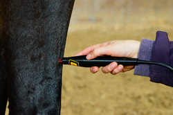 844_Laserakupunktur_Pferde