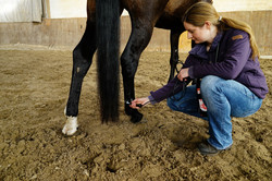 Johanna Suhr Lasertherapie Pferd