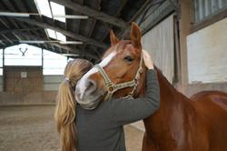 626_Johanna Loehden_Osteopathie Pferd