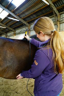 809_Johanna Suhr Lasertherapie Pferd