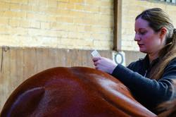 713_Johanna Suhr_Akupunktur Pferde