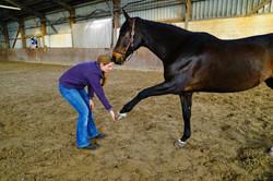 Johanna Suhr Physiotherapie Pferd