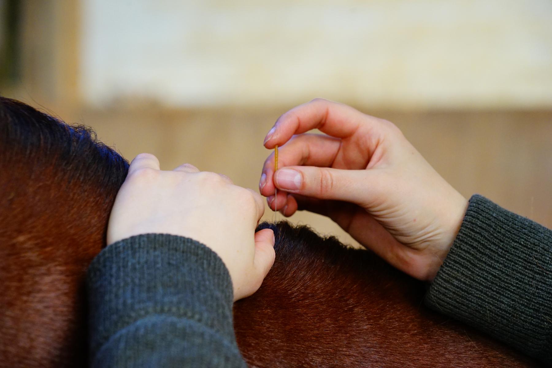 676_Johanna Loehden_Akupunktur Pferde