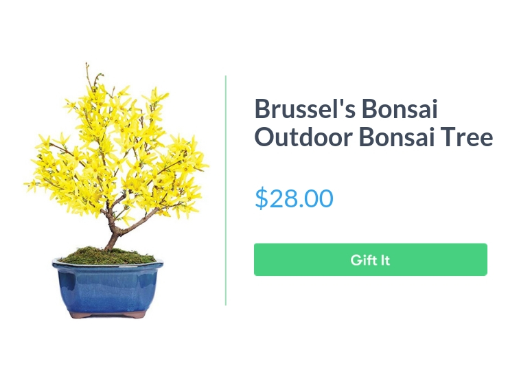 """Brussel's Live Forsythia Outdoor Bonsai Tree, $28.00, with """"Gift It"""" button"""